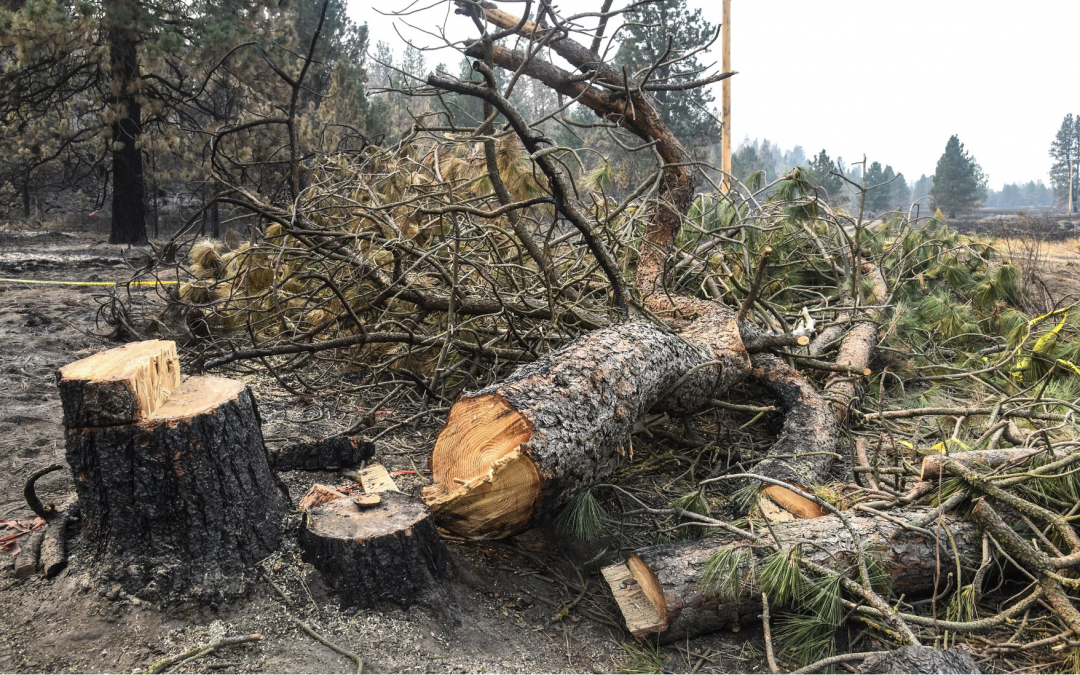 State finds weakened tree needed 'closer inspection' to prevent fire that destroyed 80% of Malden
