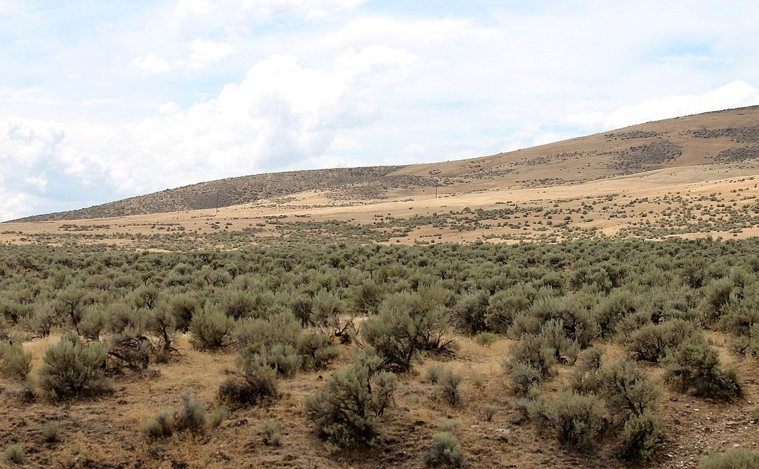 The Nature Conservancy forms new tactics to prevent eastern Washington wildfires